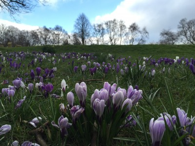 Spring flowers in the park, Manchester