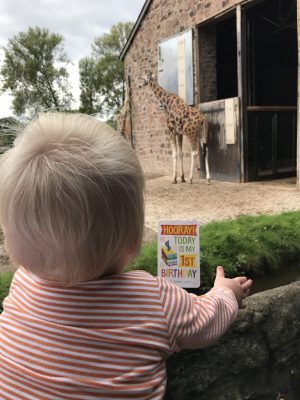 First Birthday with the giraffes at Chester Zoo
